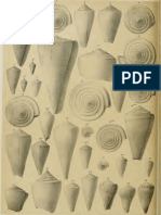 I molluschi dei terreni terziari del Piemonte e della Liguria; F. Sacco, 1893 - PARTE 13 - Paleontologia Malacologia - Conchiglie Fossili del Pliocene e Pleistocene