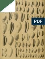 I molluschi dei terreni terziari del Piemonte e della Liguria; F. Sacco, 1894 - PARTE 15 - Paleontologia Malacologia - Conchiglie Fossili del Pliocene e Pleistocene