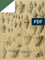 I molluschi dei terreni terziari del Piemonte e della Liguria; F. Sacco, 1893 - PARTE 14 - Paleontologia Malacologia - Conchiglie Fossili del Pliocene e Pleistocene