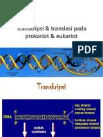 Transkripsi & Translasi Pada Prokariot & Eukariot