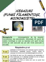 Microbiologie - Mucegaiuri