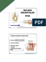 2013_TEMA_73_BOLSAS__ESCROTALES_Y_PENE.PDF_en_blanco.pdf