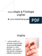 Morfologia Unghei Curs 2