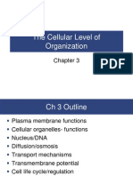 Chapter 3 Cellular Organization