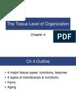 Chapter 4 Tissue Organization