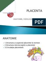 2. Placenta