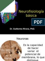 Neurofisiología básica