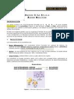 5 Acidos Nucleicos