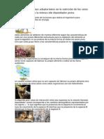 Adaptaciones-en-La-Nutricion-de-Los-Seres-Vivos.docx