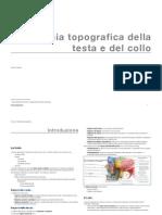 Anatomia Della Testa e Del Collo