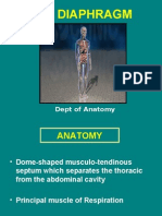 Diaphragm Lecture