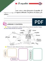 el Esqueleto - 3ro