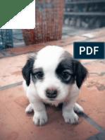 01 New Puppy