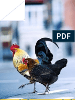 Chicken Terminology