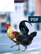 Chicken research paper
