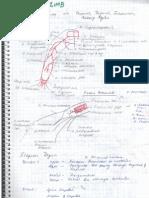 Clinical Anatomy Upper Limb