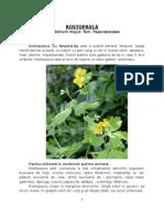Plante Cu Proprietati Curative Rostopasca