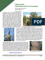 Eucalyptus_pellita_2010_e-book.pdf