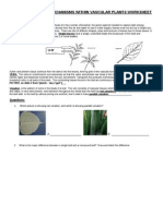 Plants Day 2 - Worksheet
