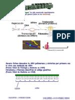 Clase8-Mutación y Código Genético 2013 (1)