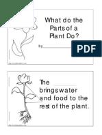 Plant Functions Worksheet