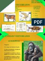4.- vertebrados