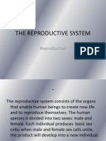 thereproductivesystem-ppt