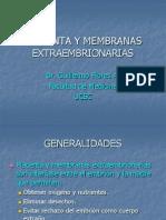 6 Placenta