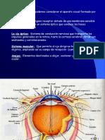 1.4 Anatomia Ojos