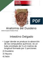 Anatomía del Duodeno