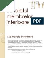 Scheletul-membrelor-inferioare