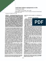 Basic Fibroblast Growth Factor