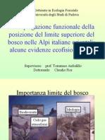 """Discussione Tesi """"Una spiegazione funzionale della posizione del limite superiore del bosco nelle Alpi italiane orientali"""