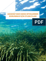 Akdeniz'deki  Deniz Bitkilerini korumak için Eylem Plani