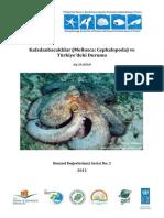 Kafadanbacaklılar (Mollusca Cephalopoda) ve Türkiye'deki Durumu