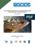 Orfoz Balığı'nın (Epinephelus marginatus) Türkiye'deki Güncel Durumu ve Koruma Önerileri