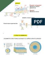 1A Membrane