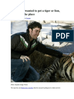 If You Ever Wanted to Pet a Tiger or Lion