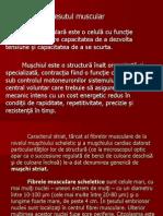 Fibra Musculara