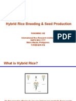 125617332 Hybrid Rice Breeding Seed Production Ppt