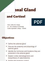 Adrenal Gland 111