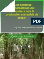 Sistemas Agroforestales Produccion Sostenible de Cacao 2011