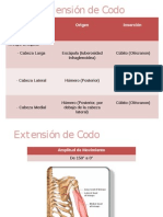 Extensión de Codo EXPO