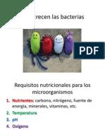 Como Crecen Las Bacterias