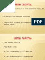 Hueso Occipital Grupo 2