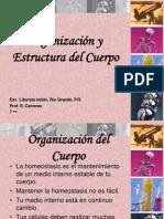 Organizacion y Estructura Del Cuerpo