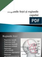 Regiunile feței și regiunile capului