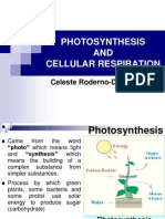 Photosynthesis and Cellular Respiration New (1)