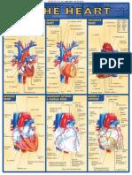 QuickStudy - The Heart