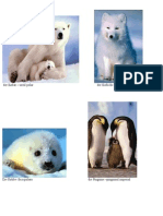 Animale Polare Flash Cards